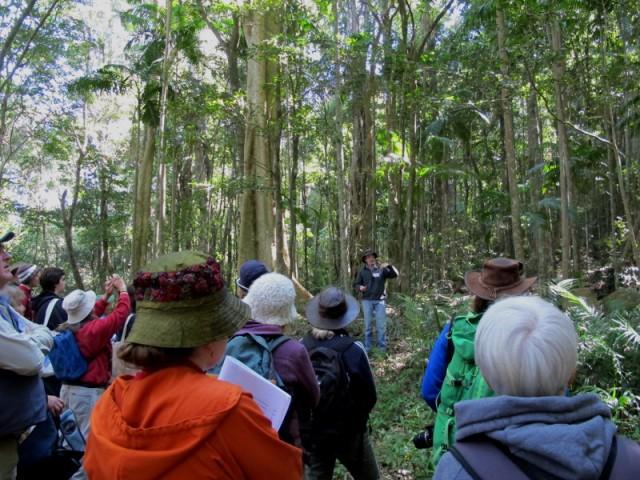 Fergus in the rainforest